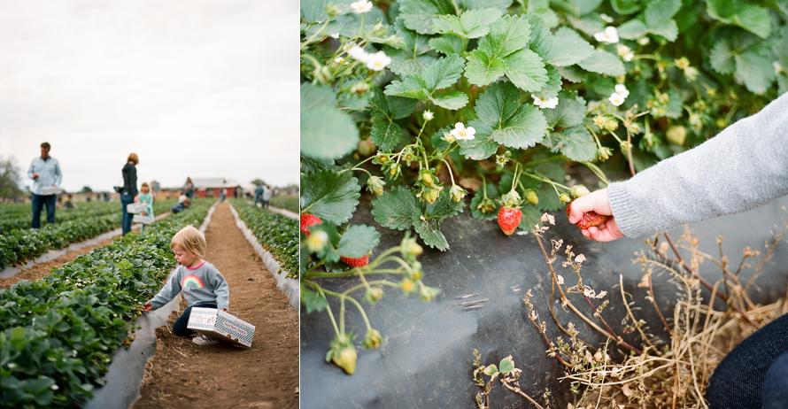 sweet_berry_farm