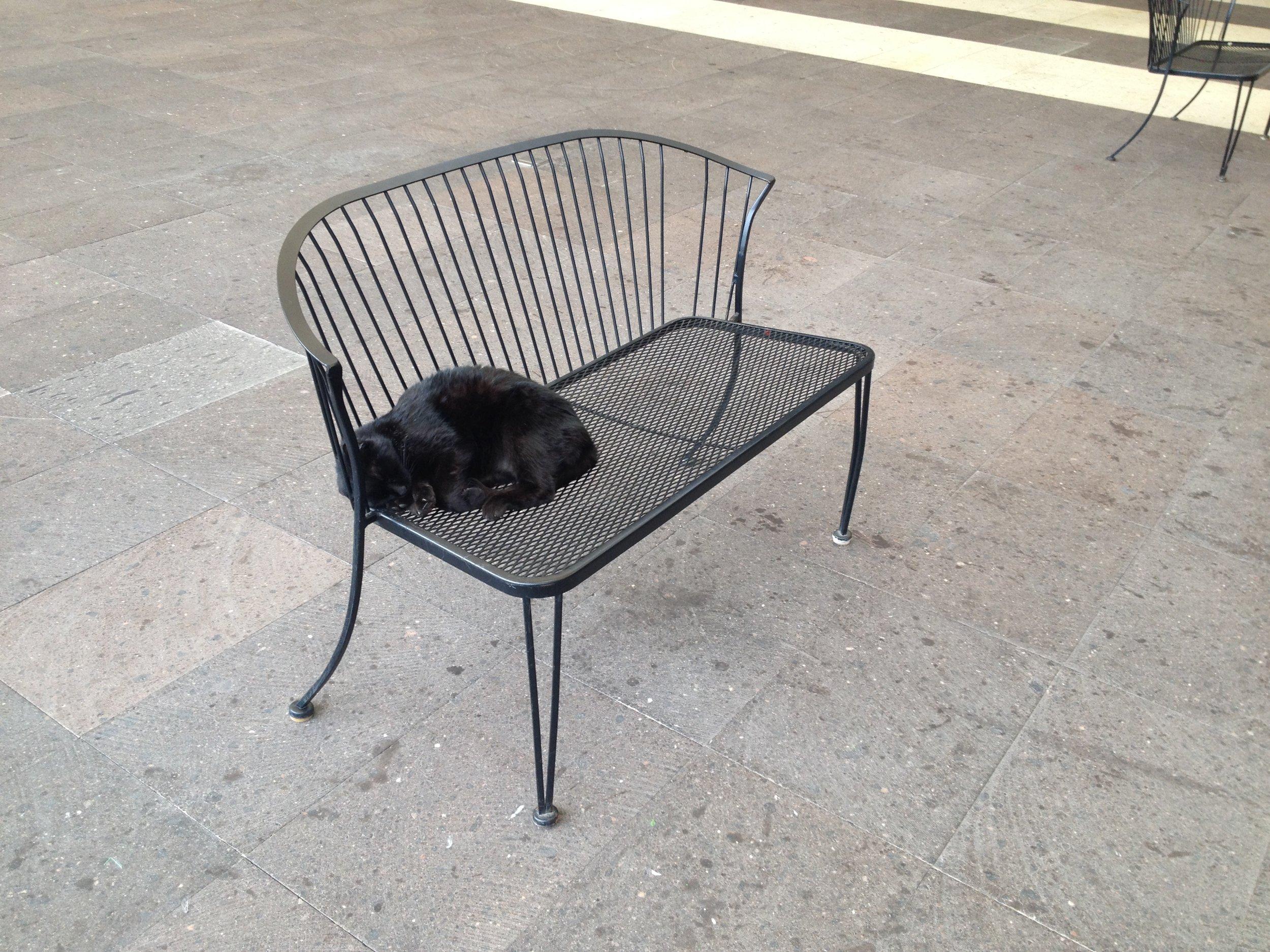 Uno de los 22 gatos residentes en la Universidad del Claustro de Sor Juana, tumbado al solecito