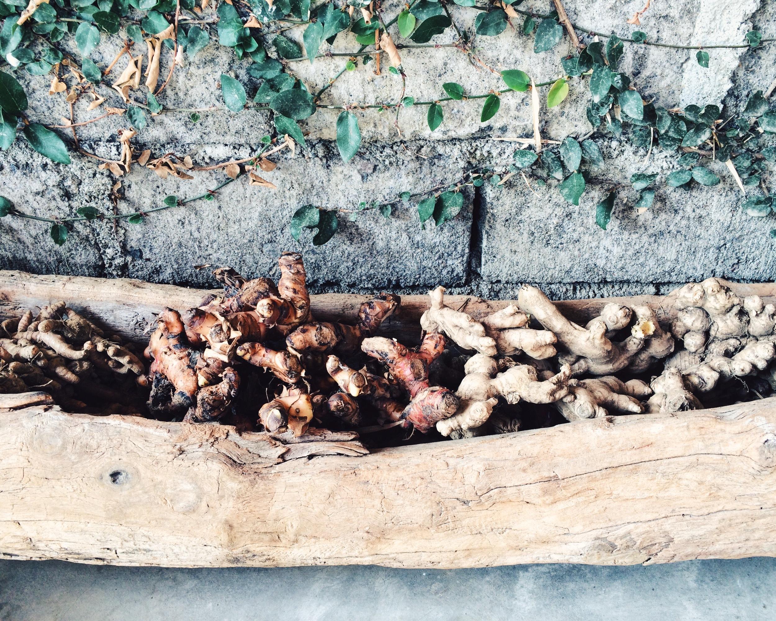 raíces de jengibre y cúrcuma