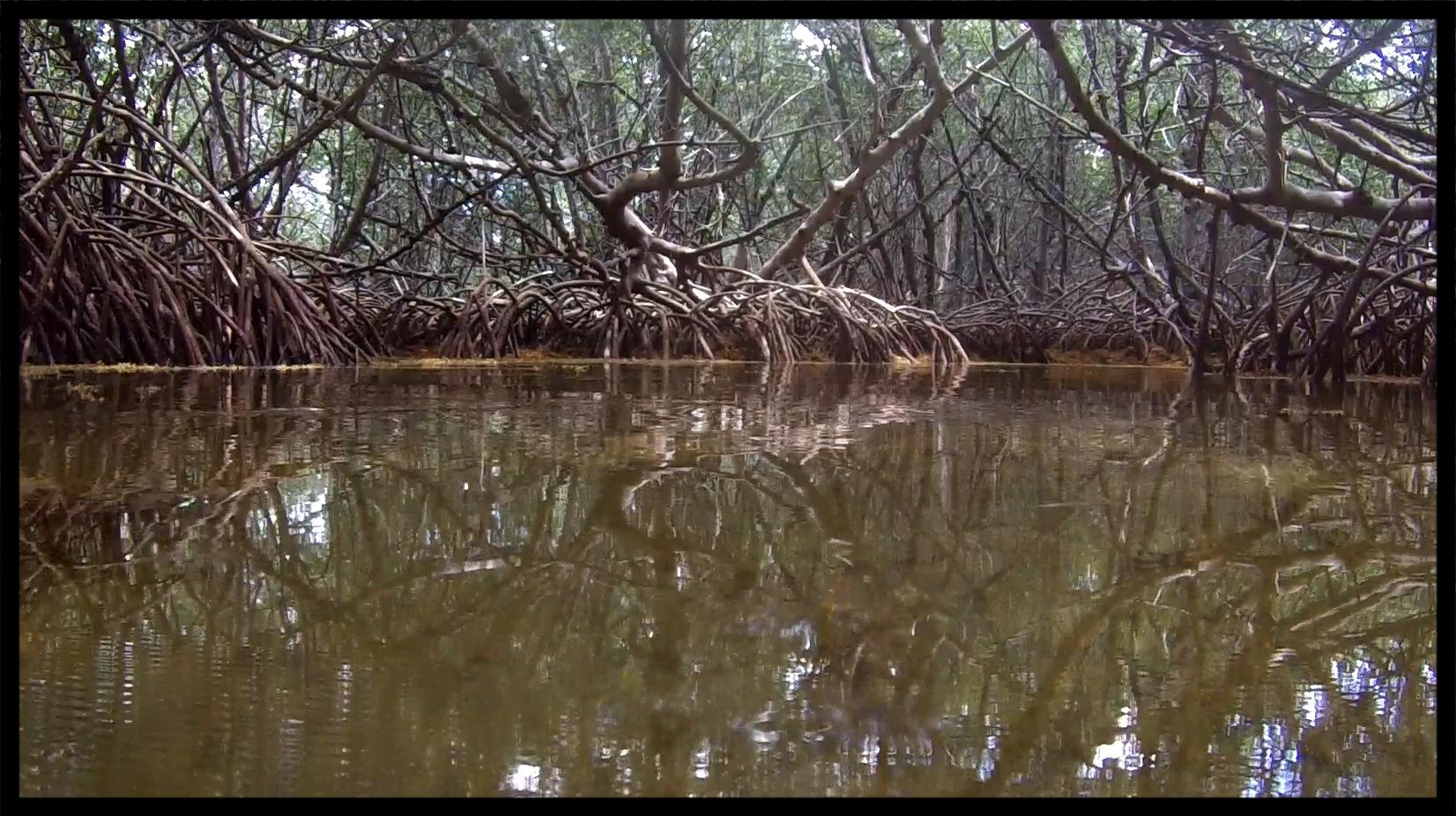 Tidal creek.