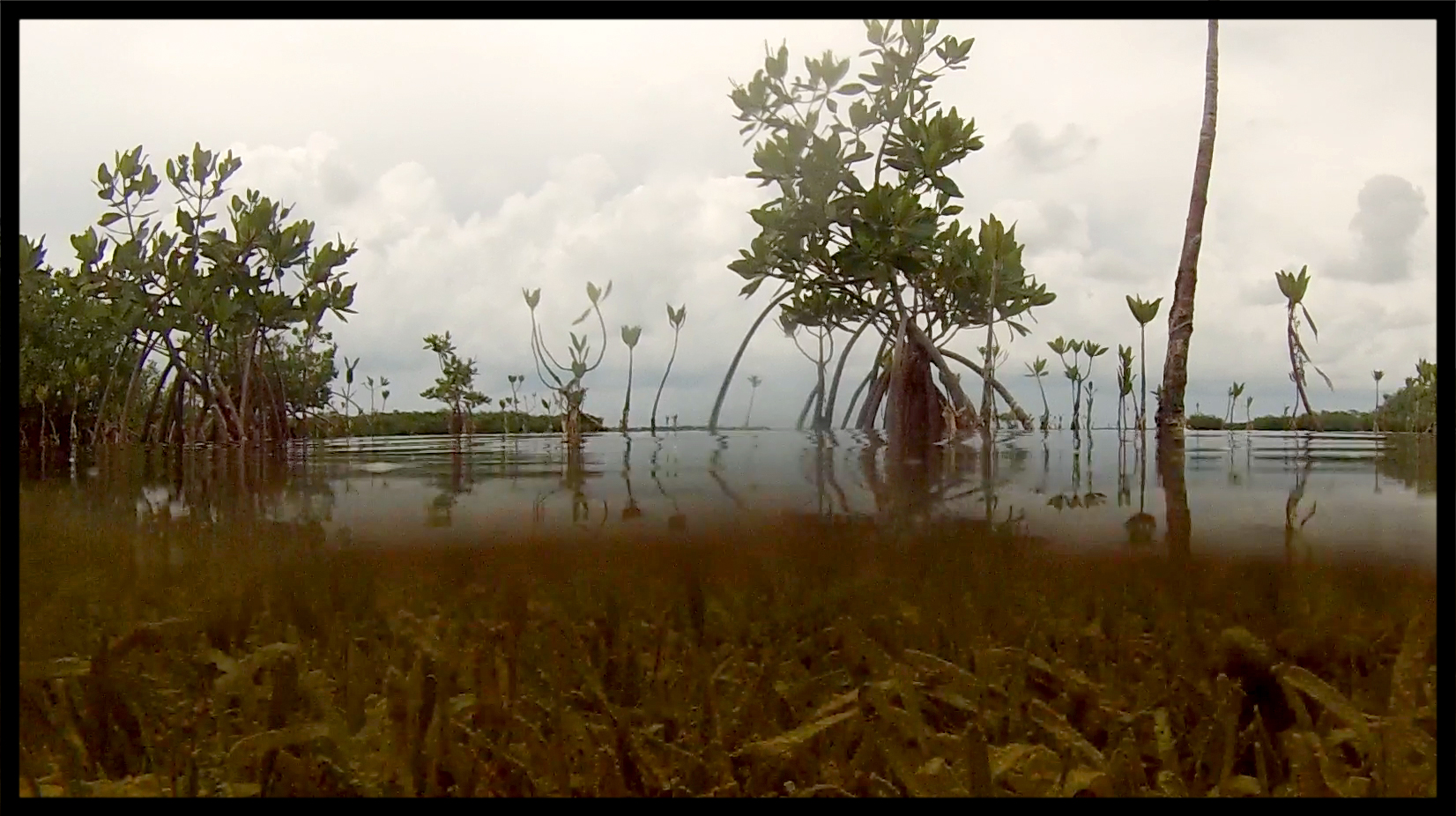 Red mangroves and thallassia.