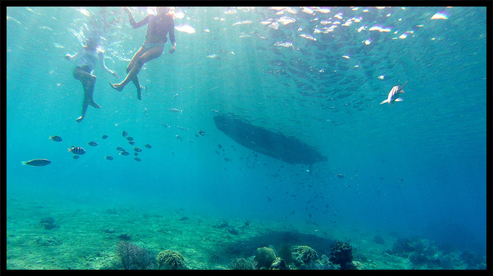 paradise_reef.jpg