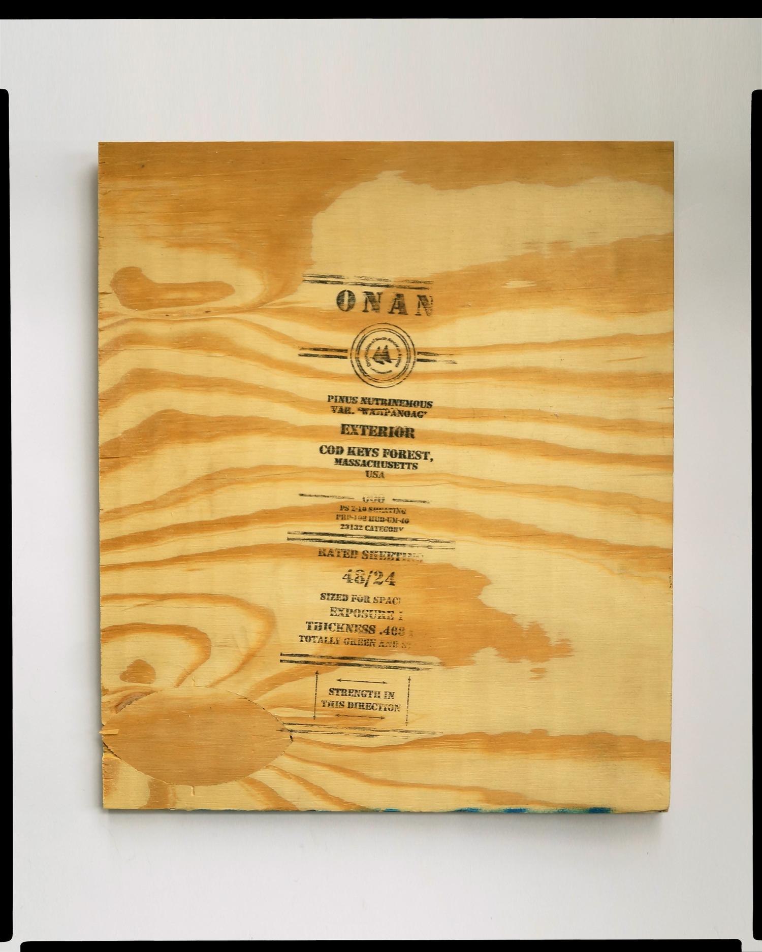 """ Sand Authority Rated Sheeting  ®."" Pinus nutrinemous var. ""Wampanoag"" green-harvested from Cod Keys Forest, Massachusetts; ONAN-SA, 2142."