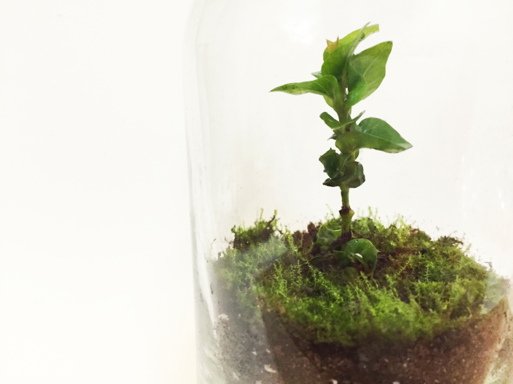 The plant and moss that are planted in the terrarium.