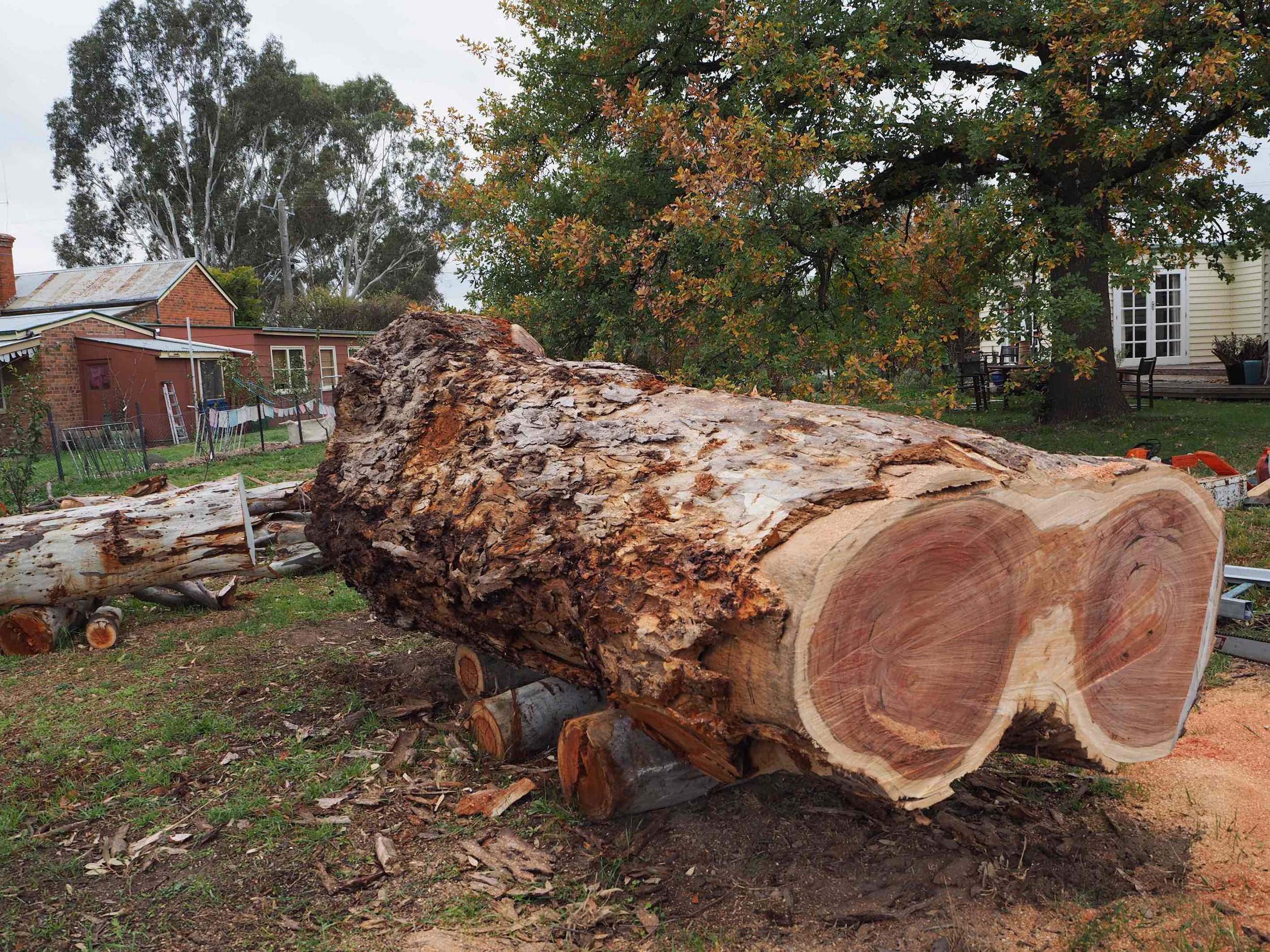 Red Gum log1 copy.jpg