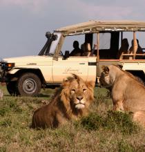 TTI_Away_safari.jpg