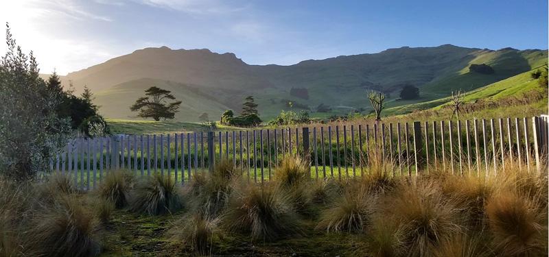 NZHillside.jpg