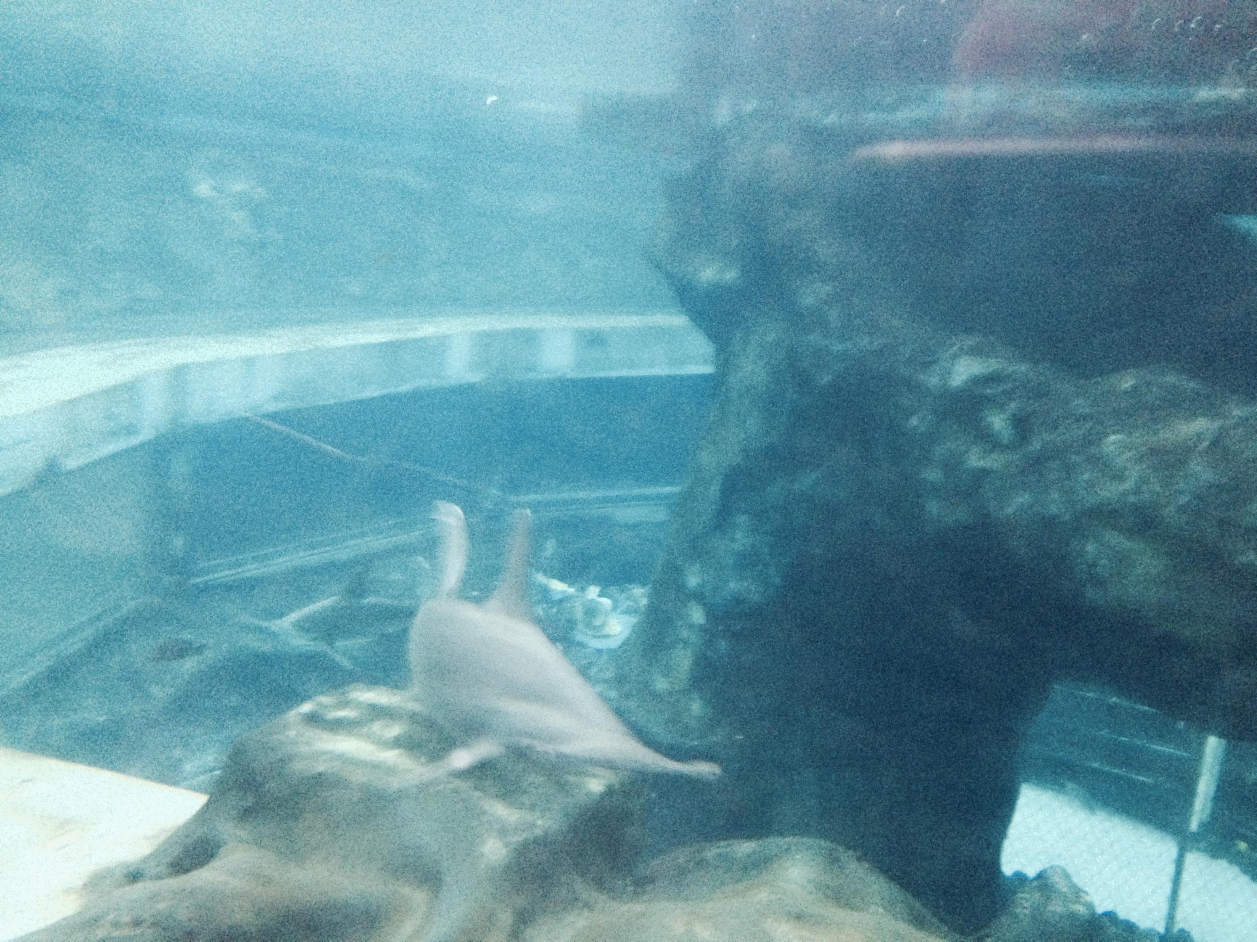 sea-life-park-shark