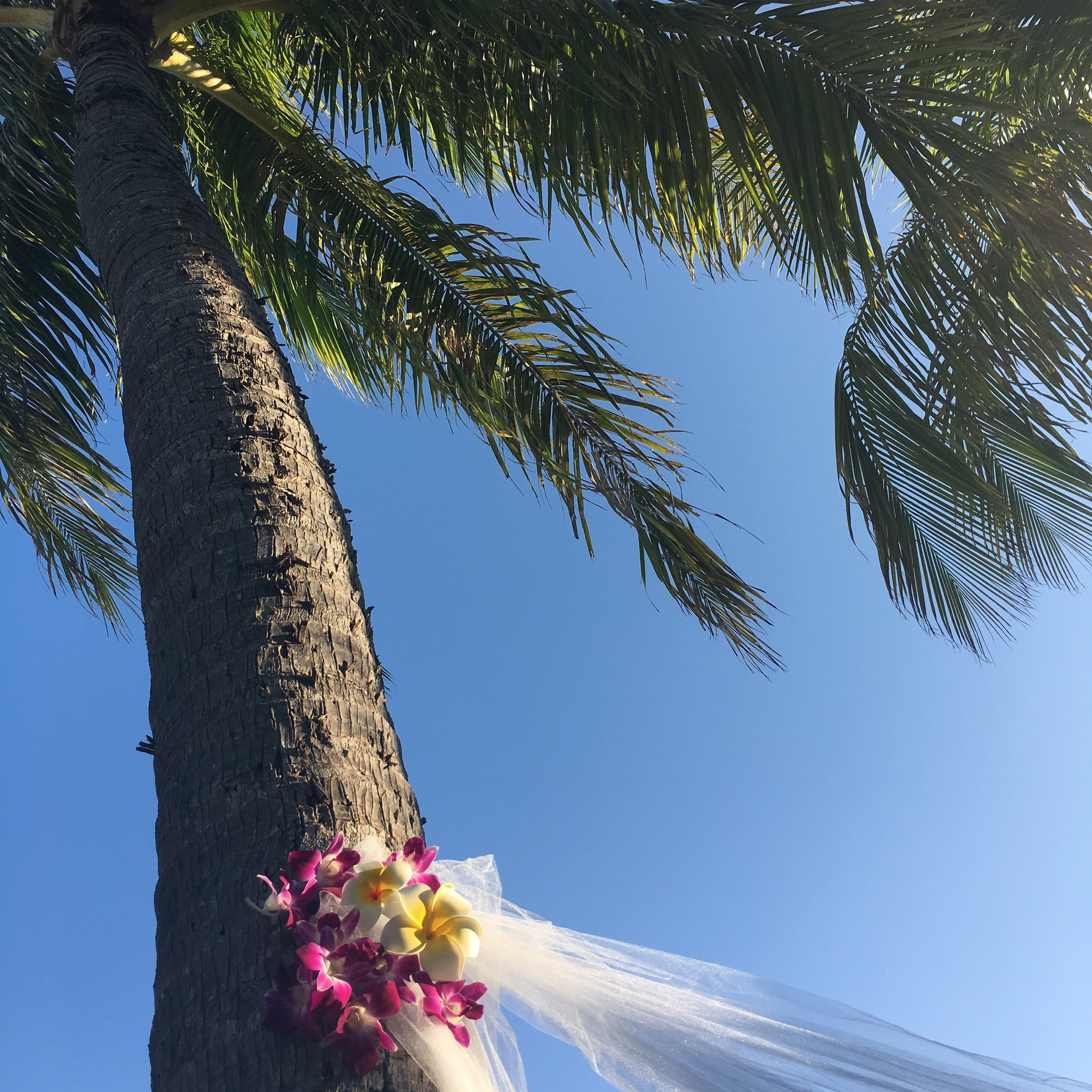flower arch coconut tree