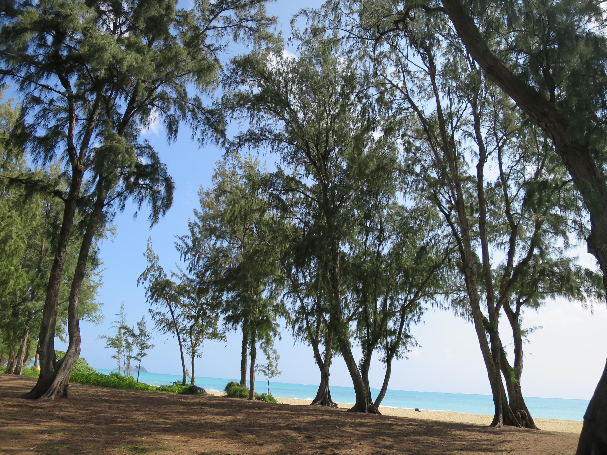 sherwood-forrest-hawaii