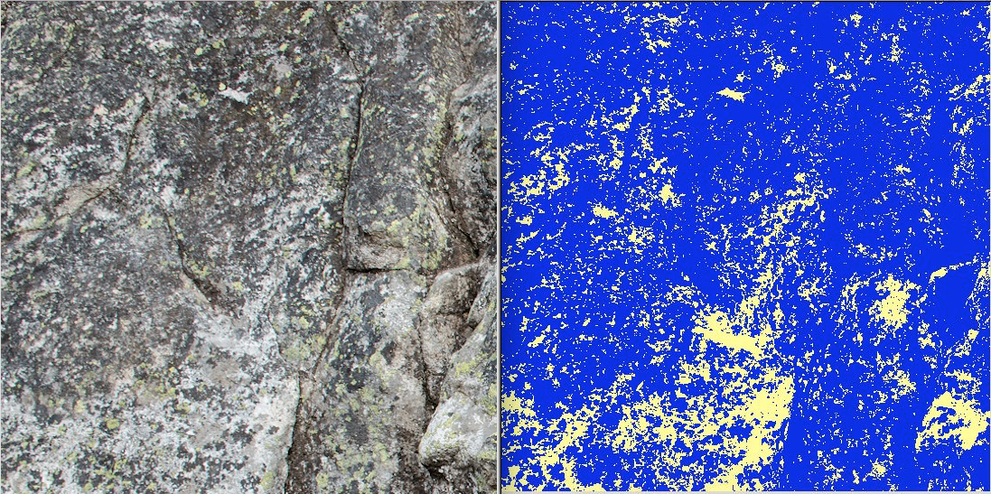 The image on the left is a section of cliff that is climbed. The image on the right is a supervised classification of the same section. Yellow indicates bare rock, while blue indicates vegetation cover.