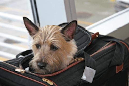 Day tripper dog