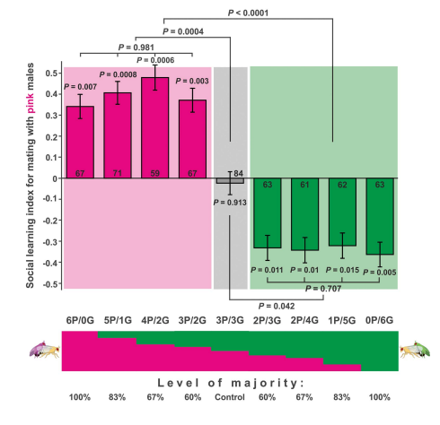 Figure 5 from    Danchin et al. Science 2018   purports to show that female flies can remember the ratio of previous green to pink males that they've seen mate, and that they use this information to select their own mate. This would be evidence of cultural transmission in  Drosophila .