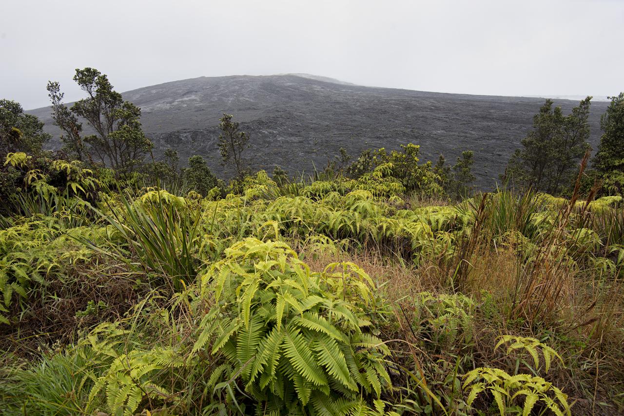 Vegetation growing on Napau Trail