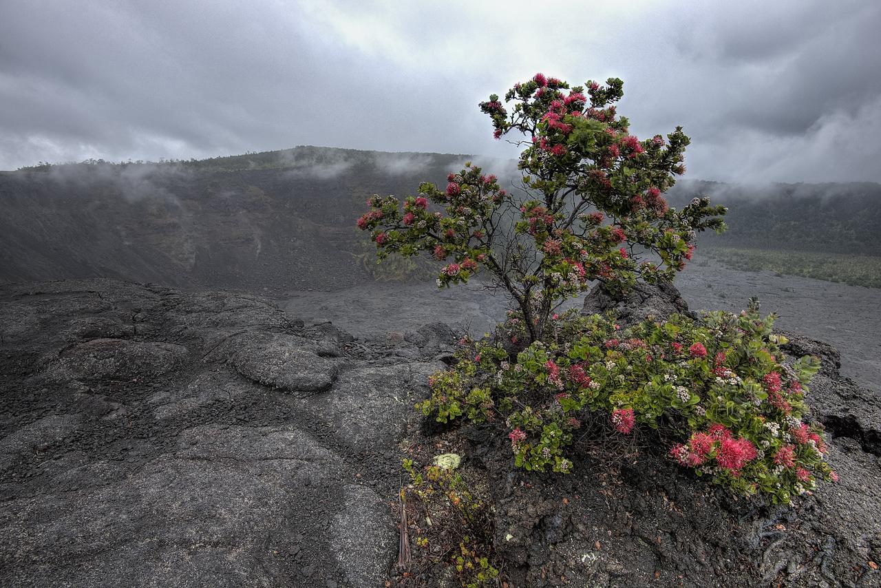 Makaopuhi Crater rim