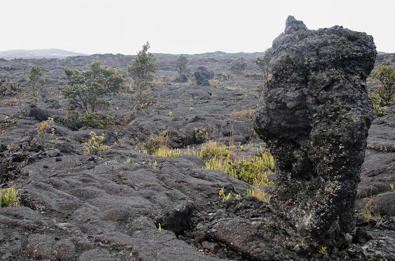 Lava tree at Napau trail