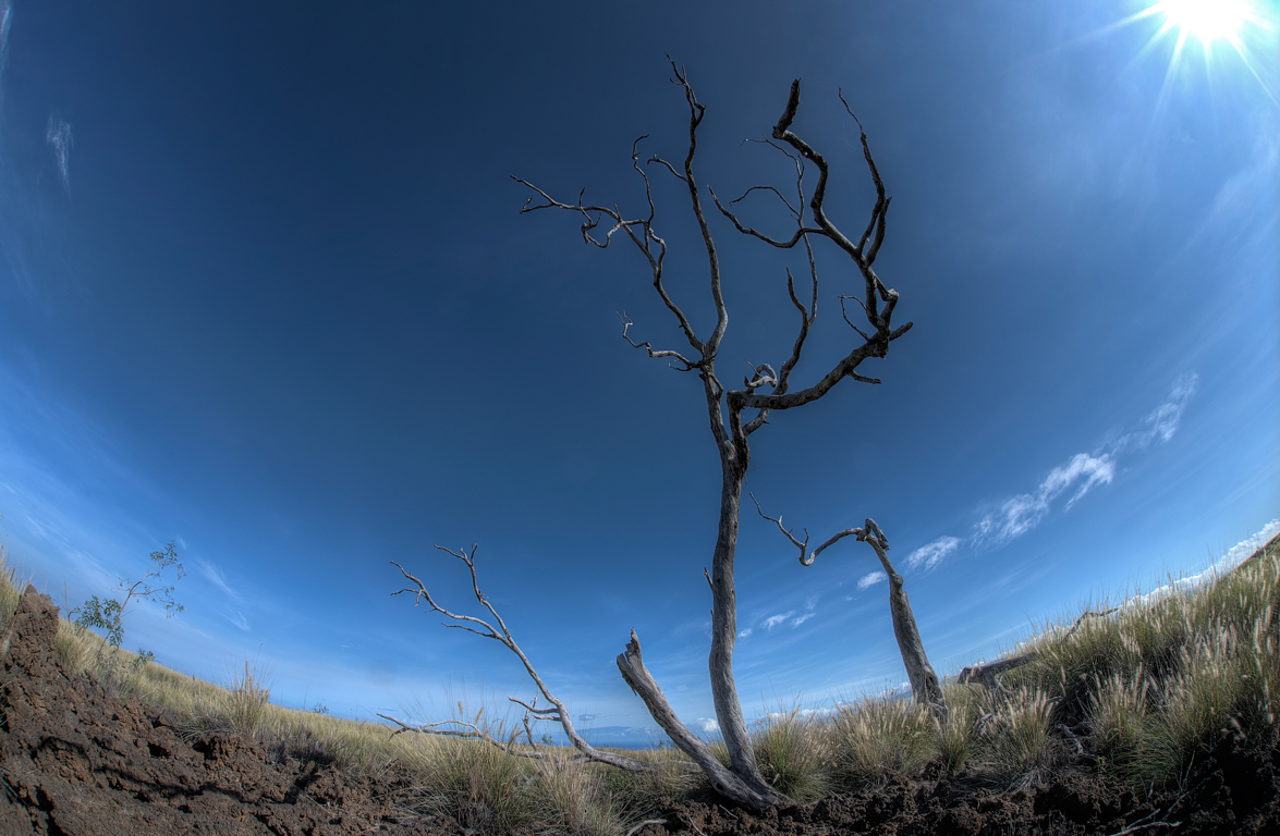 DEAD TREE2.jpg