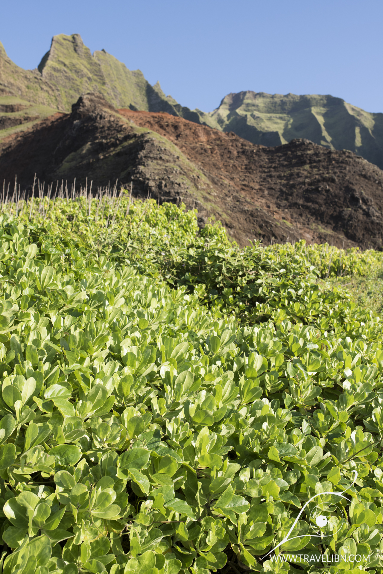 Coastal Plants Na Pali