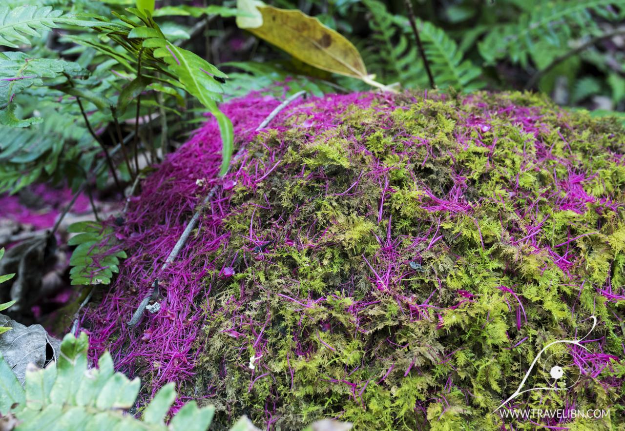 colors of kalalau trail.jpg