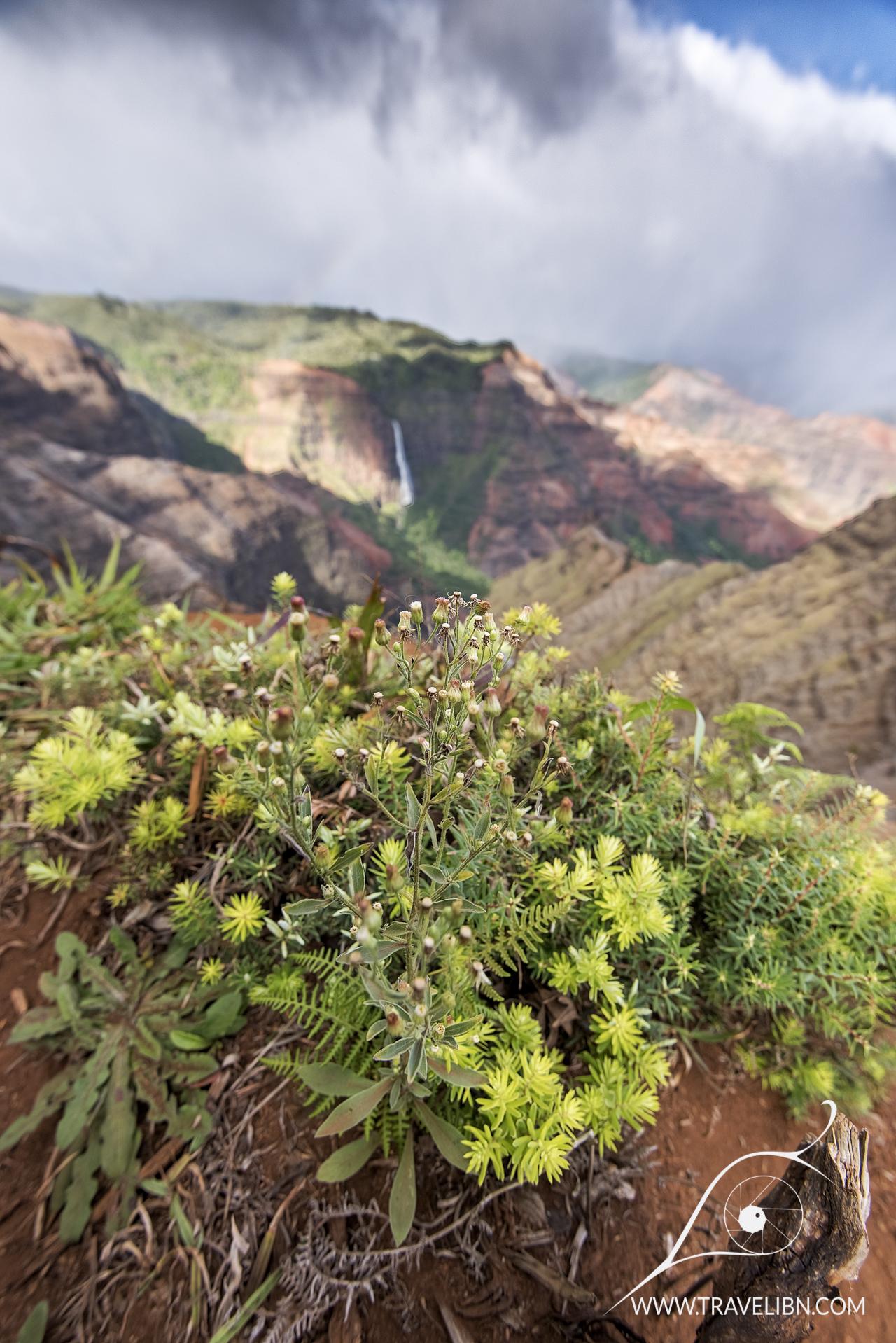 foliage waimea canyon.jpg