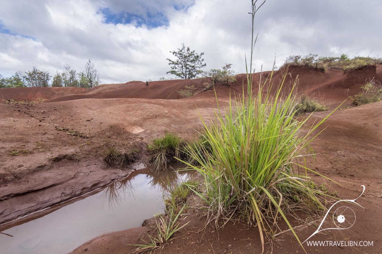 Waimea Canyon soil.jpg