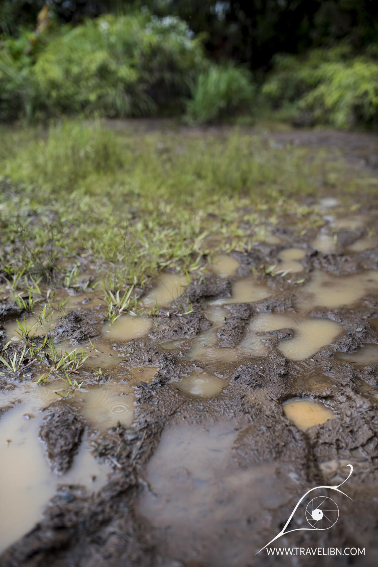 Muddy Pihea Trail