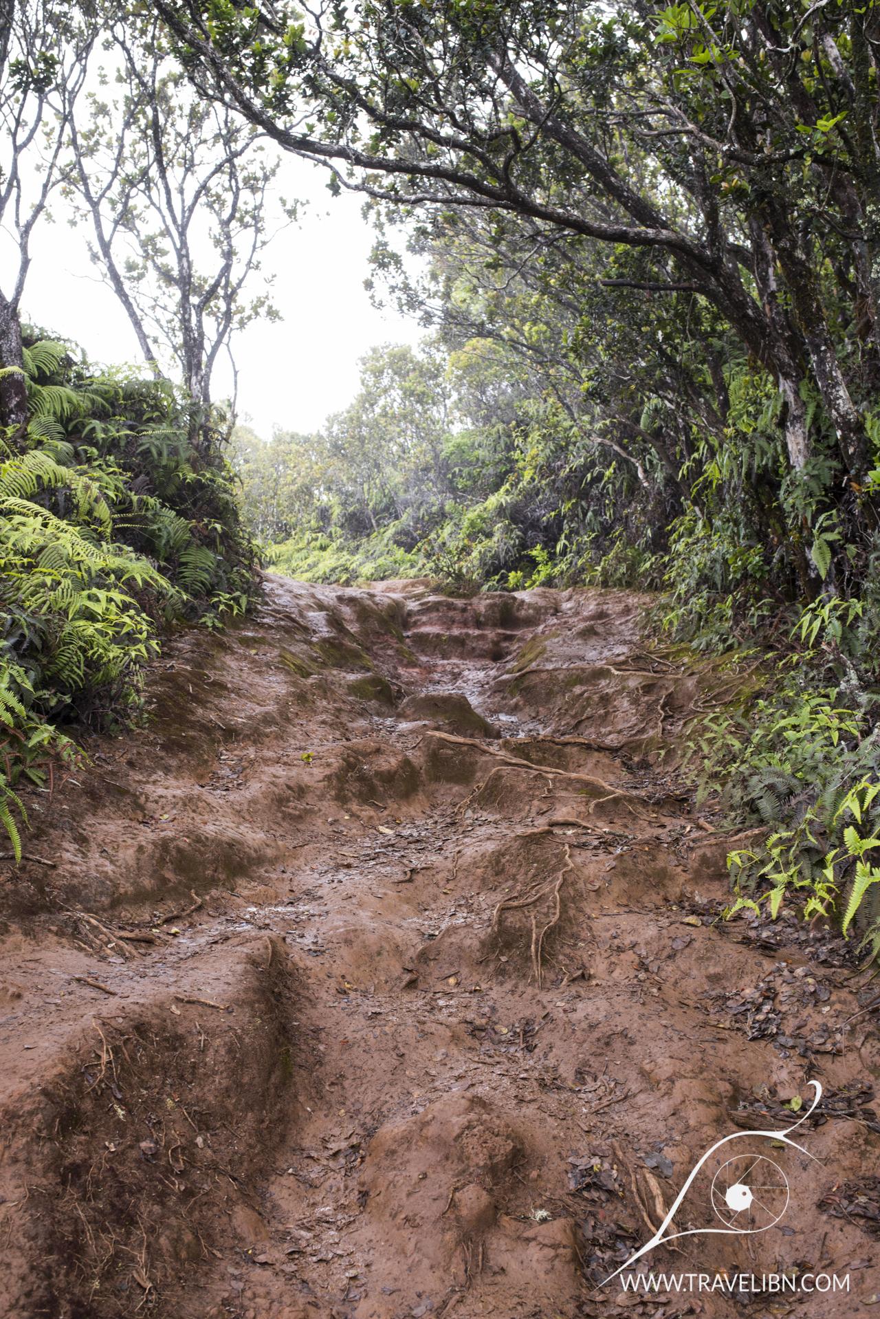 Pihea Trail condition