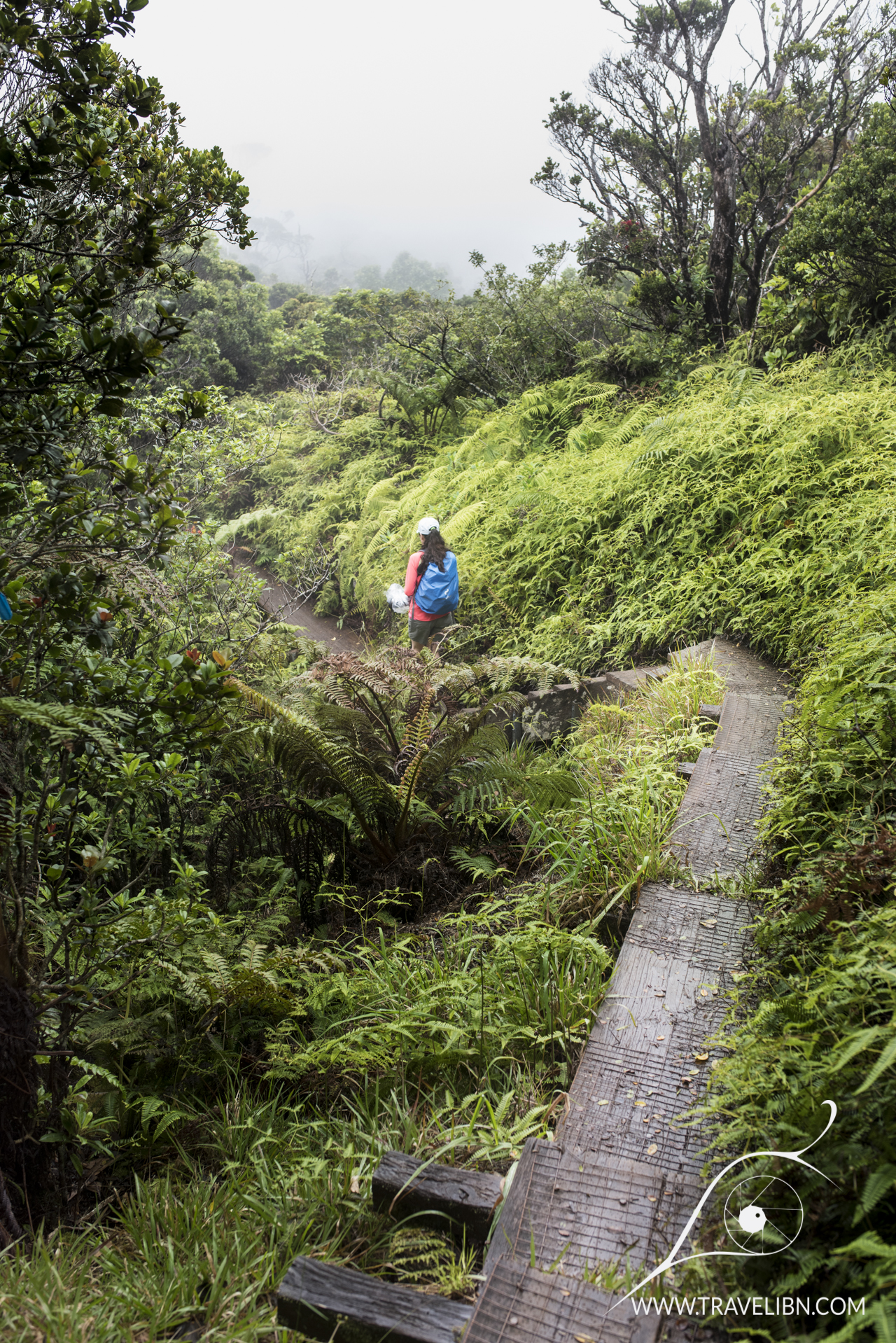 Alakai Swamp hike