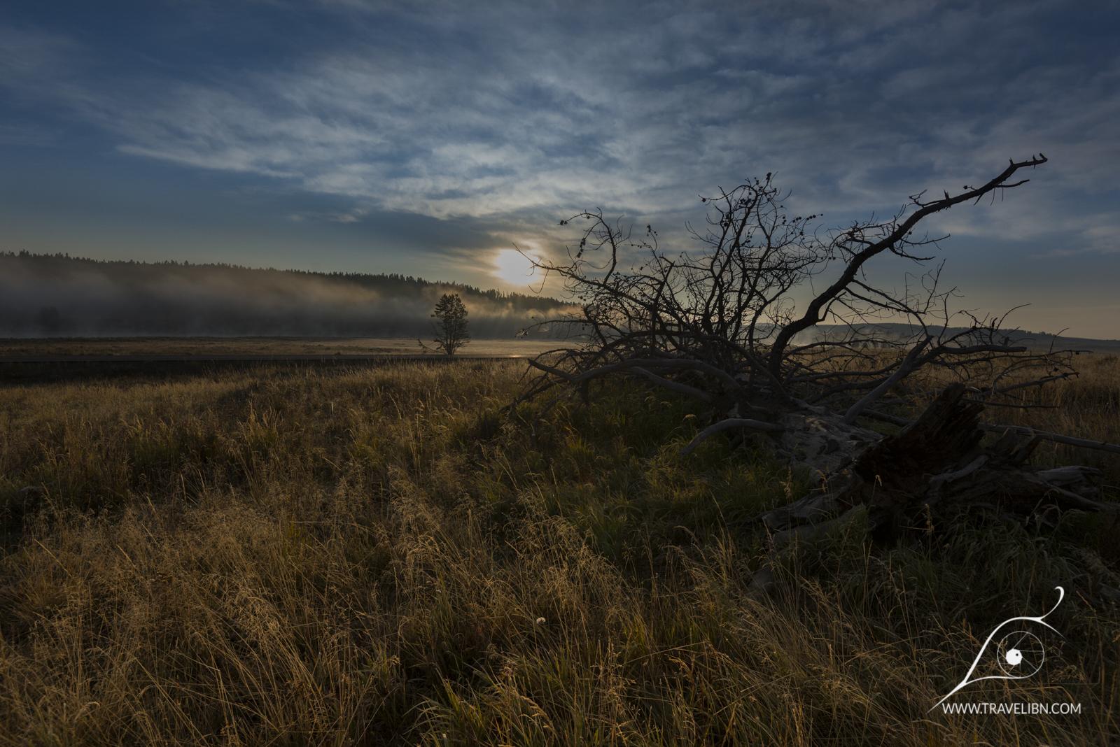 Mary Mountain trail at dawn