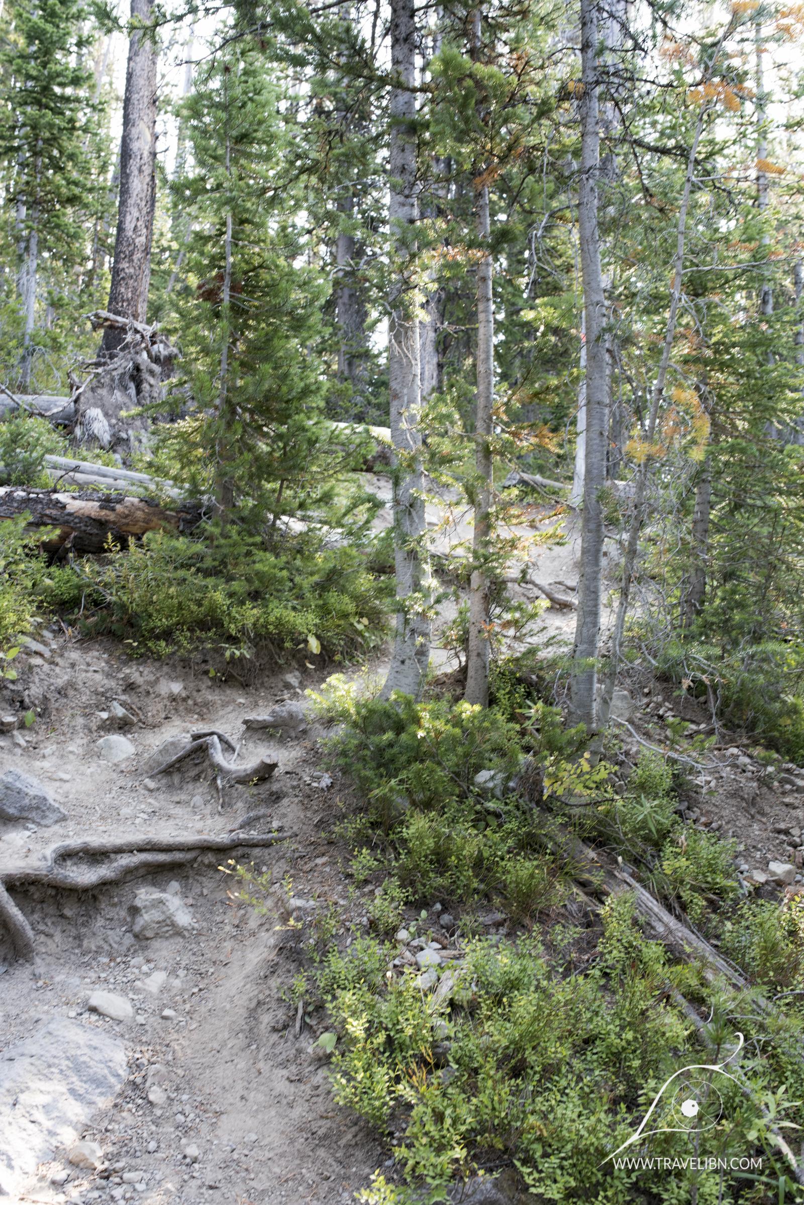 avalanche peak trail-6.jpg