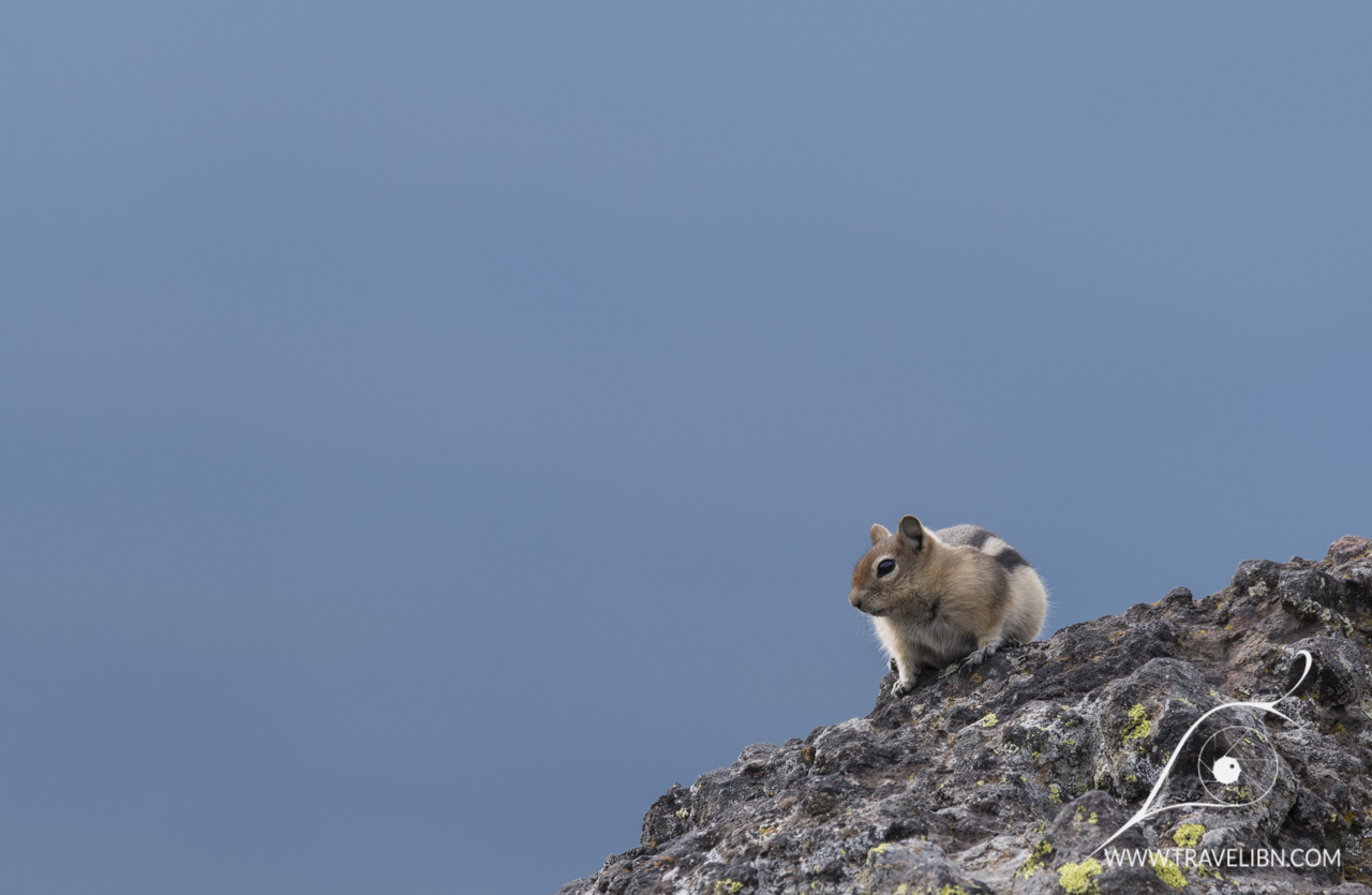 Ground squirrel enjoying the sun in Mt. Washburn