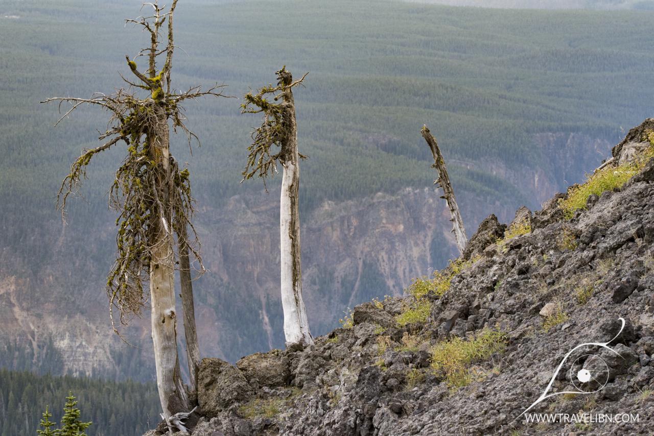 Mt Washburn Trail