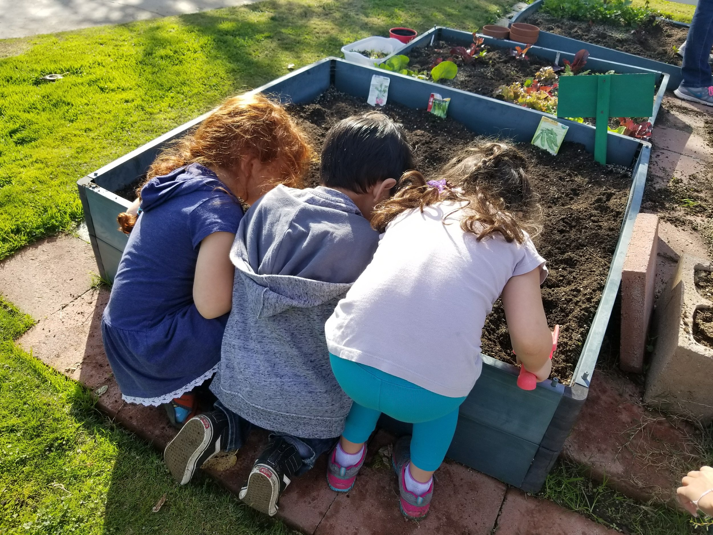 GROW - Our students help plan, plant and maintain our garden. We grow plants and vegetables to eat for snack time, feed to our pet guinea pigs and attract butterflies.