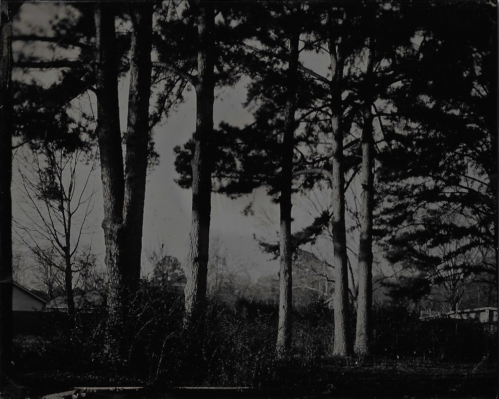 20181223_trees.jpg