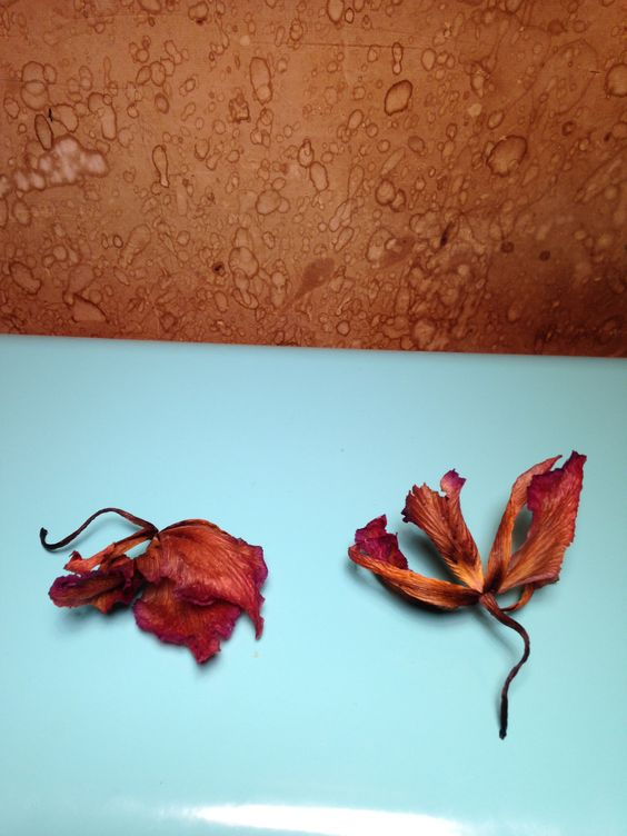 Selection of dried petals In studio