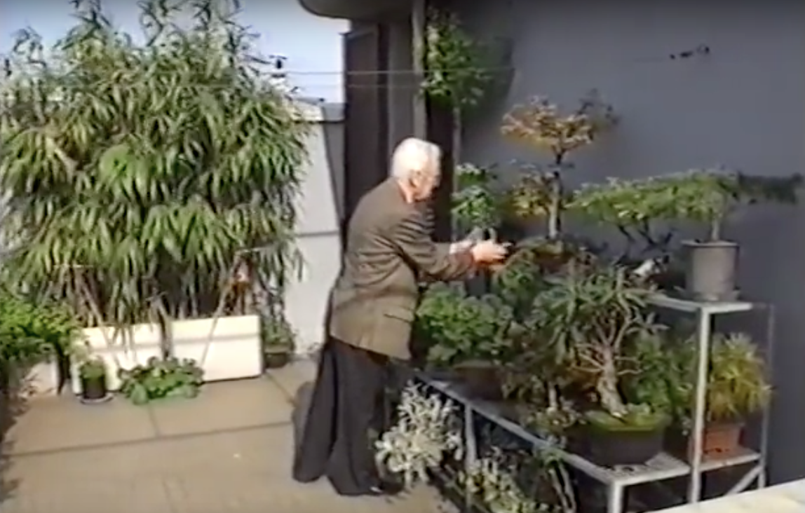 Bruno Munari's Bonsai trees