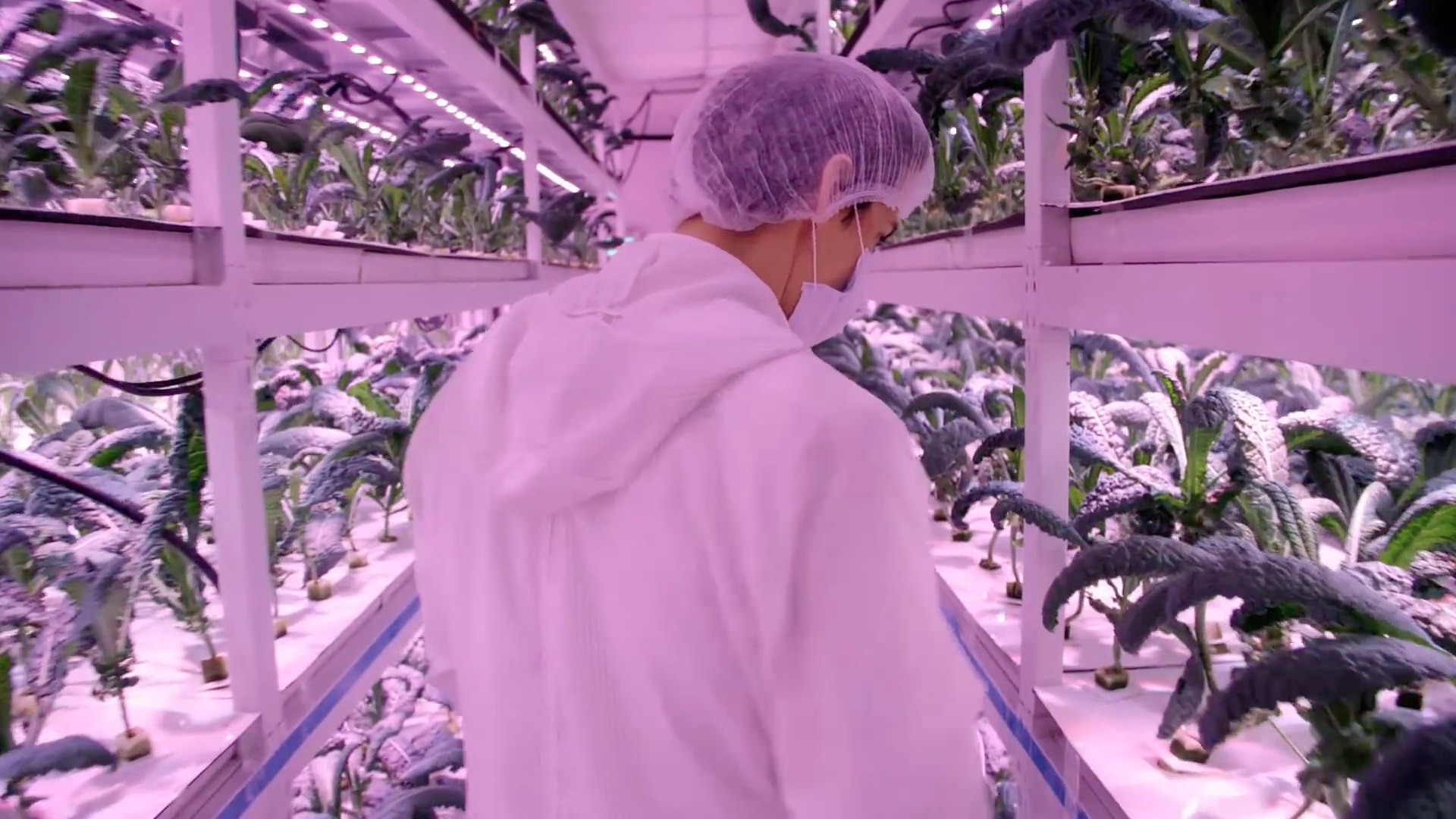 "Sustenir Agriculture, a controlled environment agriculture farm, producing food without sun or soil in indoor environments. Food production is calibrated without GMO's.  Source: National Geographic documentary ""City of the Future: SINGAPORE"""