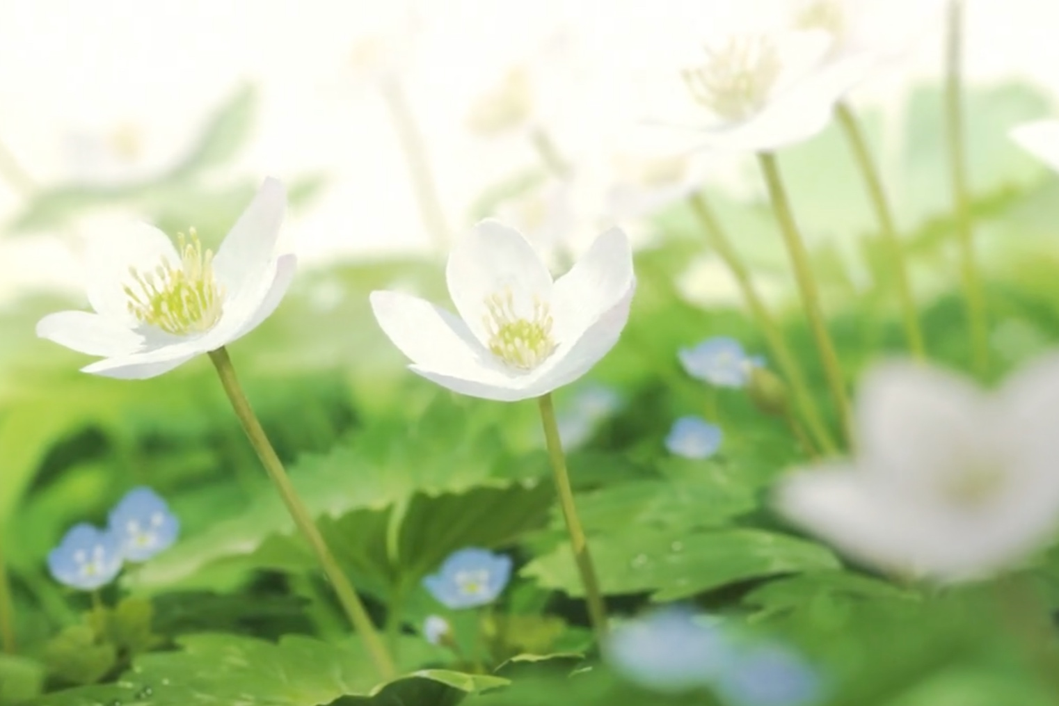 Flowers in Japanese animation