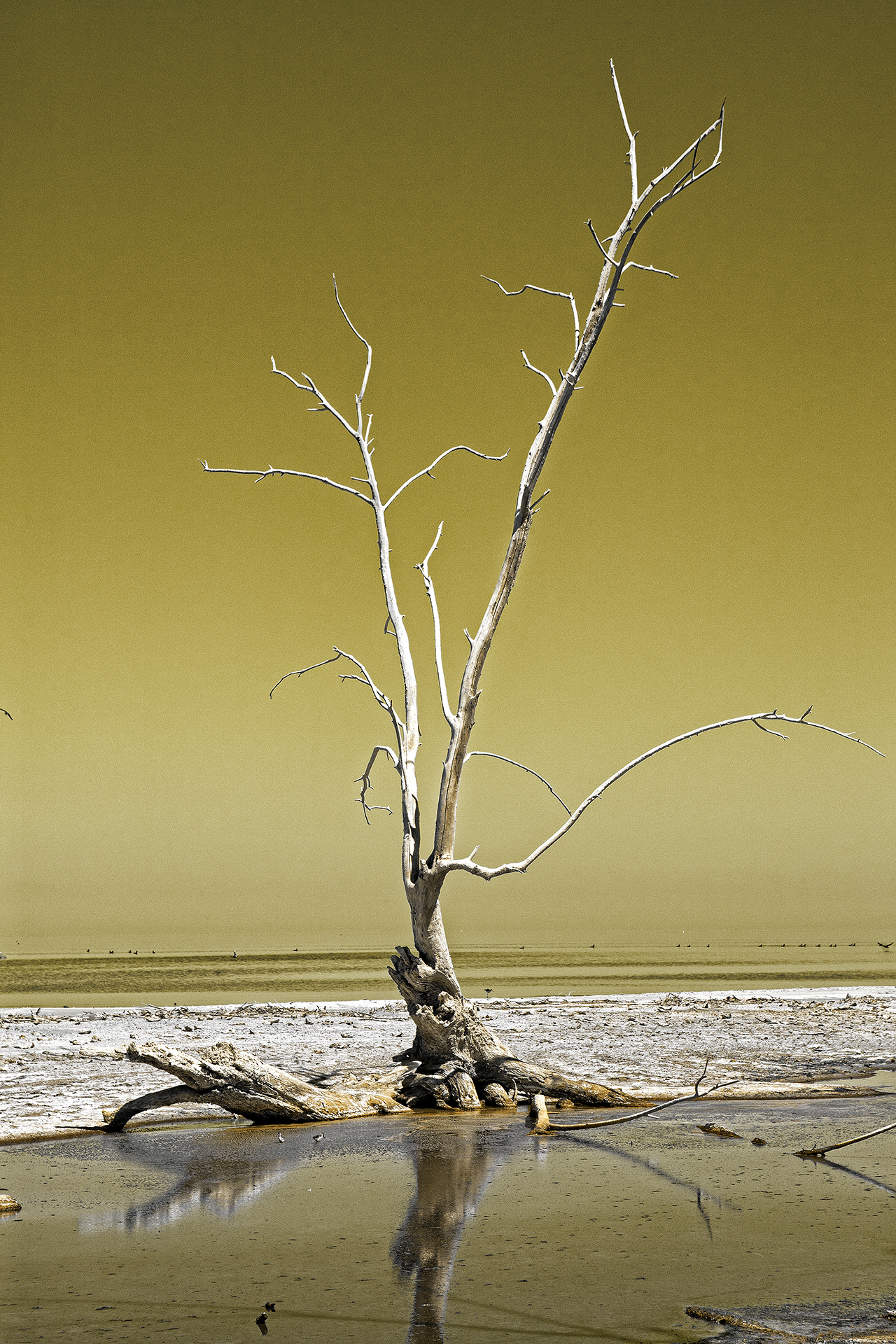 And The Dead Tree Give No Shelter