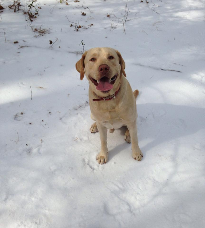 Captain in the snow