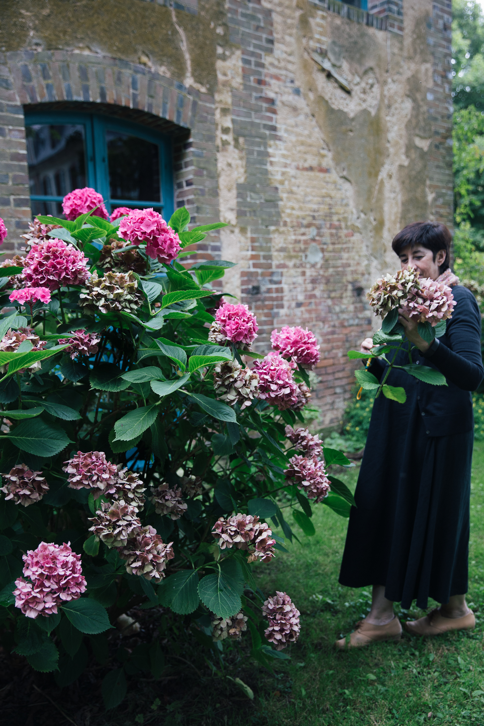 Amanda, from Australia, picking some magnificent hydrangeas.