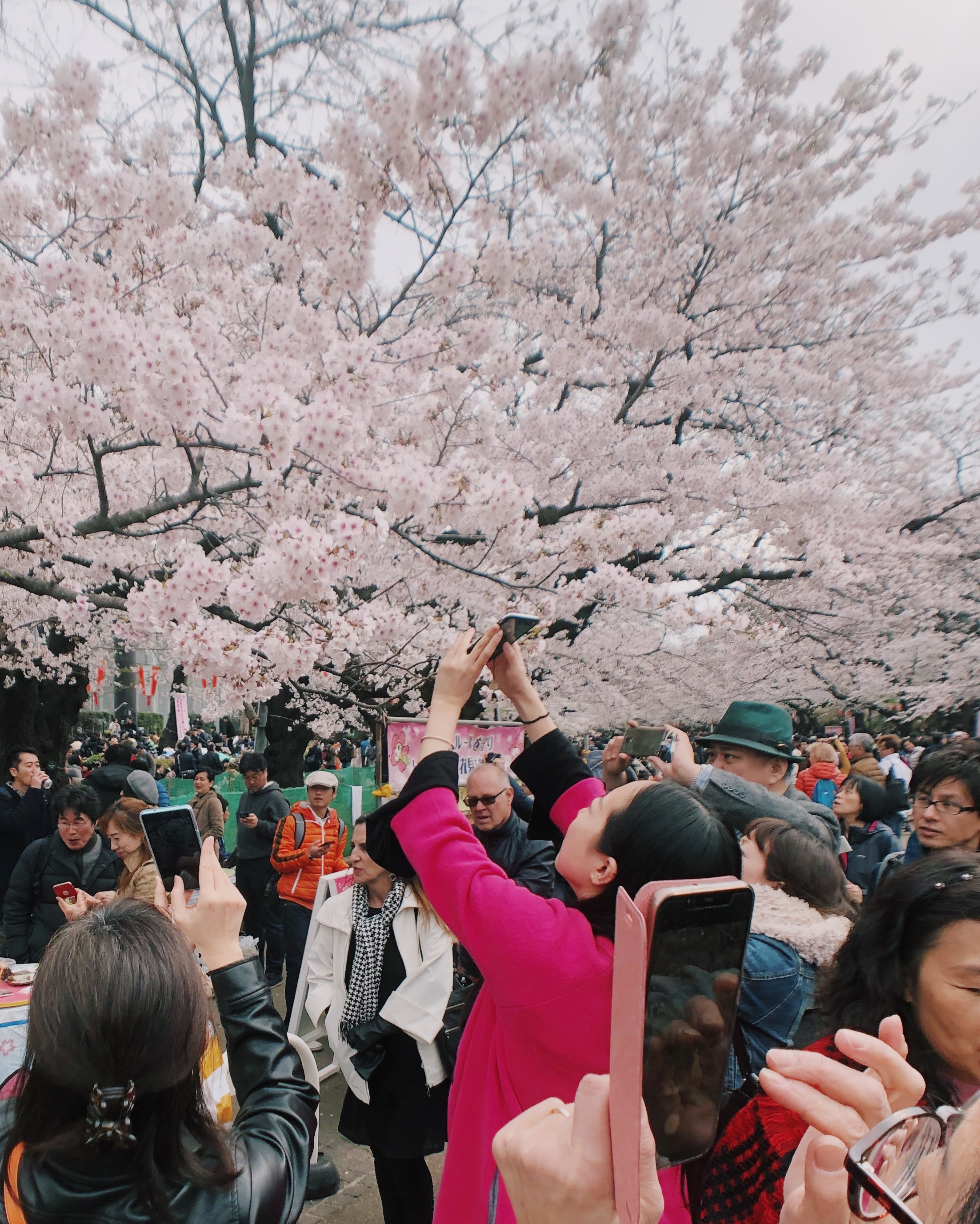 Rush to Sakura, Ueno Park.