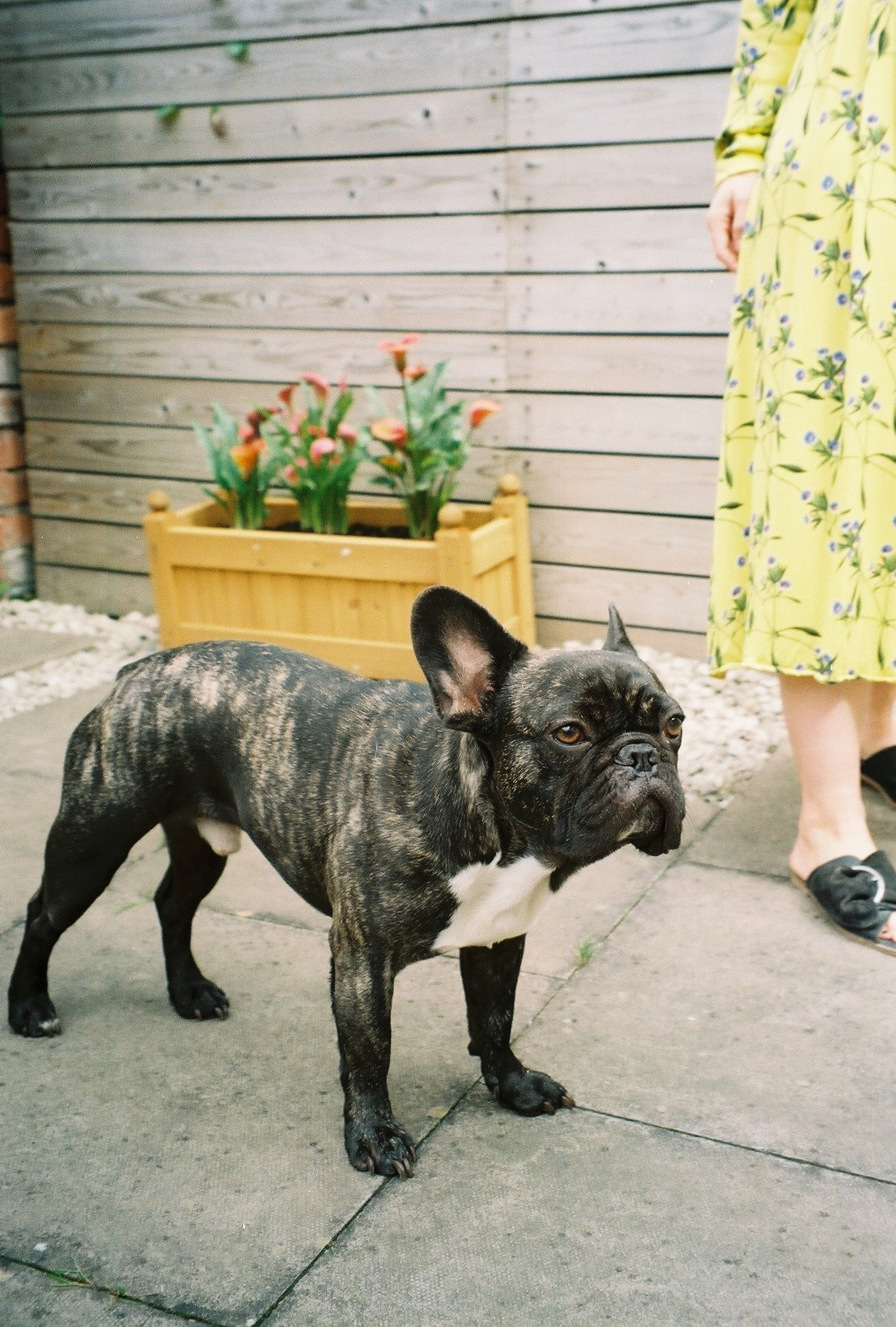 preloved clothes and online vintage shopping, in midi floral dress and a french bulldog called bernard 3