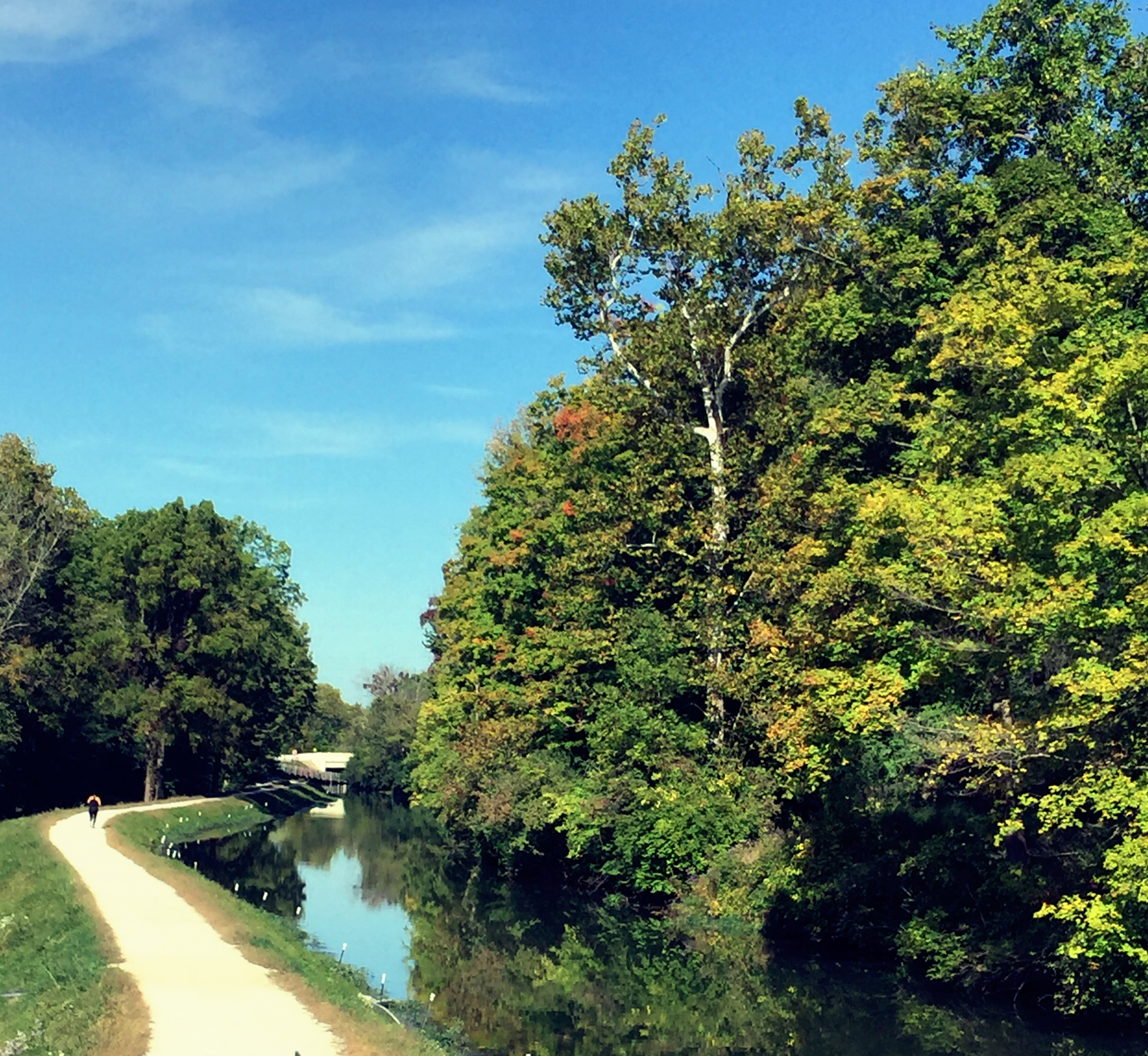 The Central Canal Towpath alongside 100 Acres.