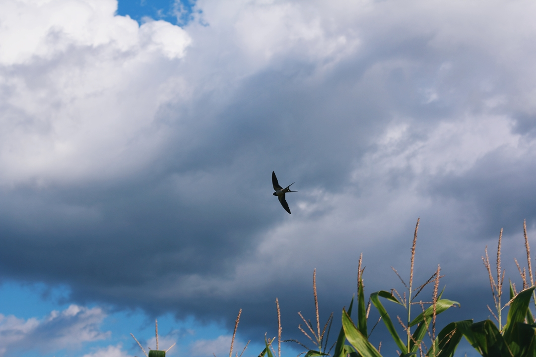 bird and clouds.JPG