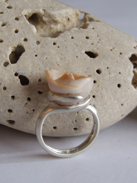 50 Helix shell ring.jpg