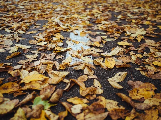 Thanksgiving road.jpg