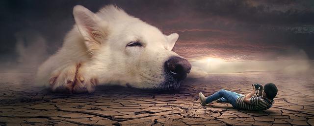 dream dog.jpg