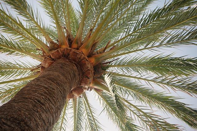 palm-tree-406995_640.jpg