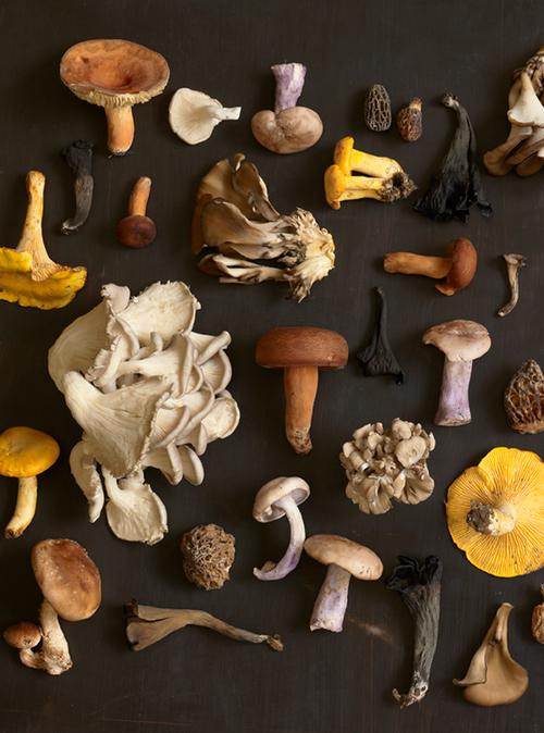Mushrooms_44381.jpg